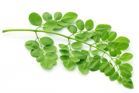 moringa leaf for tea